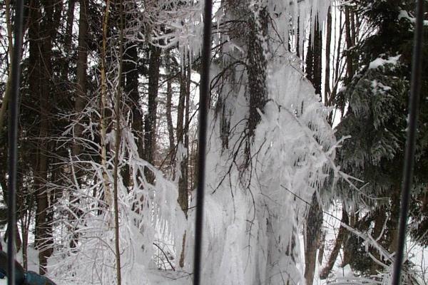Frostschutz.jpg